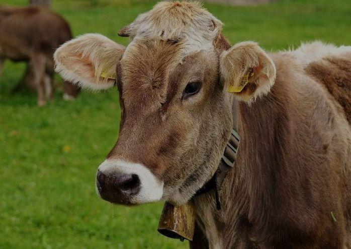 jfz-livestock1